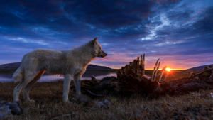 Kingdom of The White Wolf photo