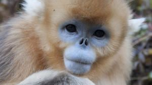 Forest of The Golden Monkey photo