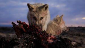 Kingdom of The White Wolf photo