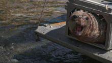 ألاسكا وإنقاذ الحيوانات برنامج