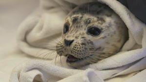 ألاسكا وإنقاذ الحيوانات صورة
