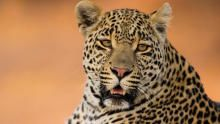 Predator Bloodlines show