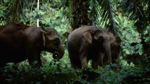 Borneo And Sumatra photo