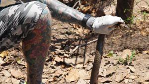 ثعابين ومياه المجاري صورة