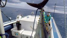 قارب صغير وسمكة كبيرة برنامج
