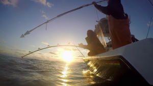 Little Boat, Big Tuna photo