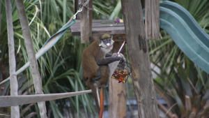Secrets of The Zoo: Tampa photo
