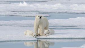 World Polar Bear Day photo