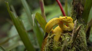 Wild Central America photo