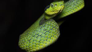 الحياة البرية في أمريكا الوسطى صورة
