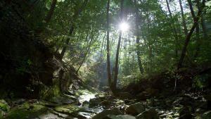 كوريا البرية صورة