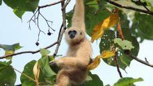 تايلاند البرية برنامج