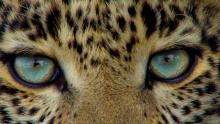 Aquamarine eyes show