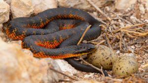Killer Snakes photo