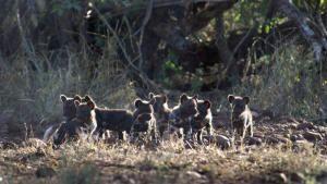 Wild Africa: Africa's Big 5 photo