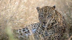أوكافانغو أفريقيا: أكبر خمس حيوانات في أفريقيا صورة
