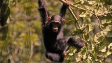 أوكافانغو أفريقيا: أوغندا البرية برنامج