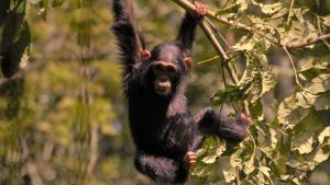 Wild Africa: Wild Uganda photo