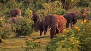 أوكافانغو أفريقيا: أوغندا البرية صورة
