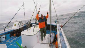 الصيد العاصف صورة