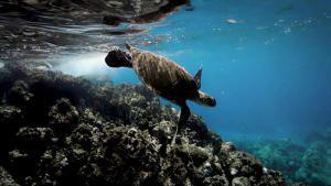Wild Abu Dhabi The Turtles of Al Dhafra photo