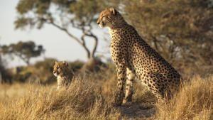 أشرس كائنات أفريقيا صورة