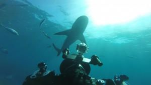 World's Biggest Bull Shark photo
