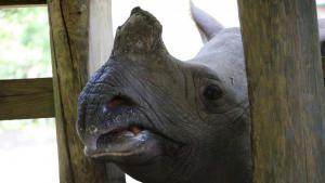 You're The Rhino I Want! photo