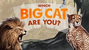 Big Cat Quiz