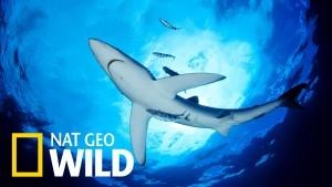 What's on the Nat Geo Wild channel - National Geographic