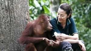楊紫瓊與紅毛猩猩 Great Apes With Michelle Yeoh