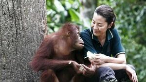 楊紫瓊與紅毛猩猩 Great Apes With Michelle Yeoh