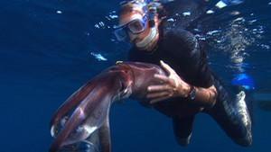巨魷對戰抹香鯨 Squid Vs. Whale