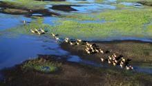 三比西河 Zambezi 節目