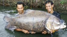صنارة الصيد! برنامج