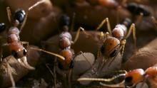 螞蟻城 City Of Ants 節目