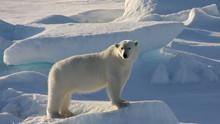 上山下海拍動物 World's Wildest Encounters 節目