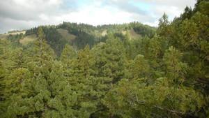 Bir Devin Anatomisi: Redwoods