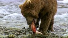 Salmon Wars show