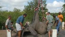 搶救非洲野生動物 Wildlife Rescue Africa 節目