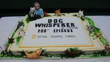 The Dog Whisperer 4 show