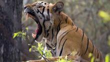 Wild India show