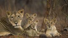 狂野印度 Wild India (aka Secrets of Wild India) 節目