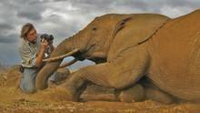 Serengeti show
