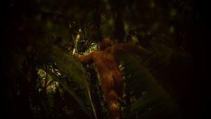 怪物獵人:蘇門答臘小矮人 Beast Hunter: Apeman of Sumatra