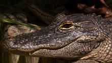 Swamp Men 3 show