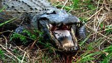 沼澤動物樂園 Swamp Men 節目