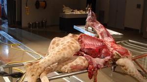 Animal Autopsy