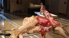 Animal Autopsy show