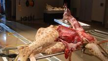 Animal Autopsy show